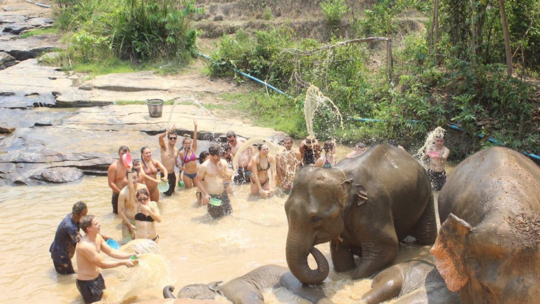Feed and Bathe with Elephants Here!