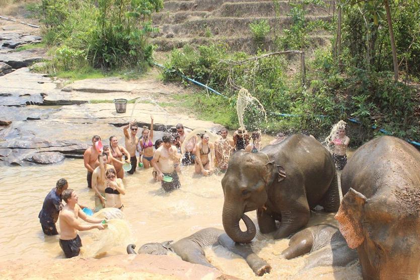 Feed and Bathe with Elephants Here!