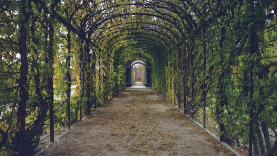 Architecturally Stunning Botanical Gardens
